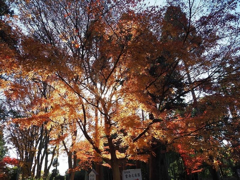 京都五山で何思う!?_e0374932_07155665.jpg