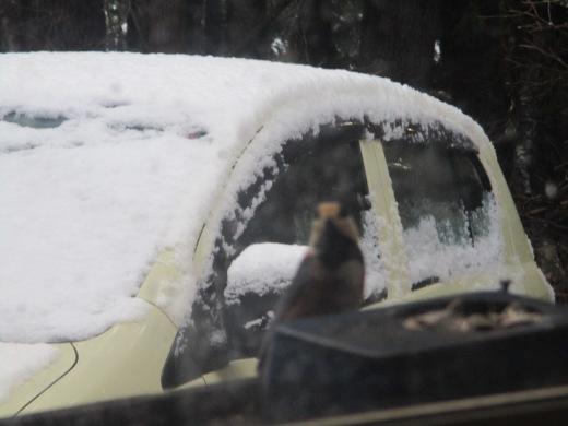 ちょっと雪     12月23日(月)_d0127634_08171133.jpg