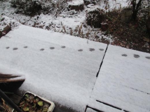 ちょっと雪     12月23日(月)_d0127634_08200383.jpg