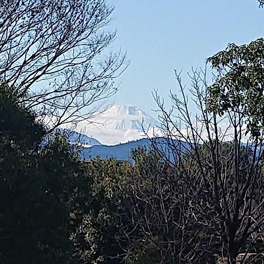 冬の昭和記念公園(富士山とイノシシ)_c0338136_20033301.jpg