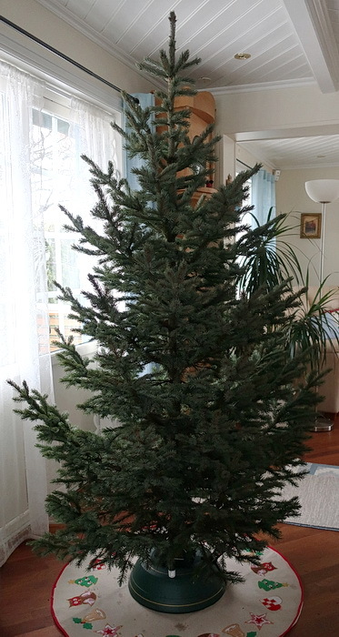 クリスマスツリー_a0353839_15461546.jpg