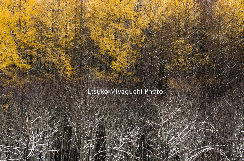 季節のはざま_f0152939_17235858.jpg