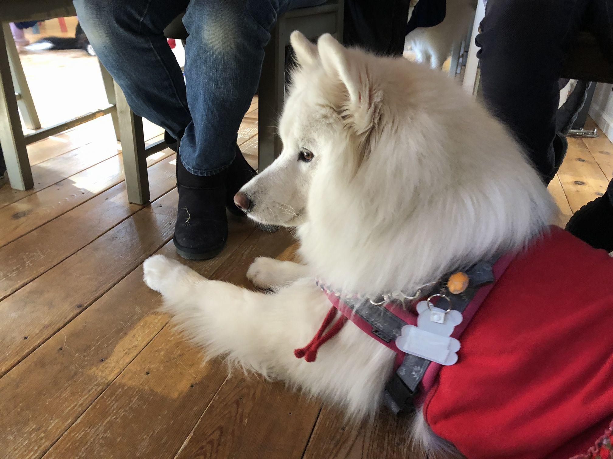 2019年12月 合同お誕生会オフ in Ven! Kitchen&Dog Garden その1_f0128542_01331587.jpg