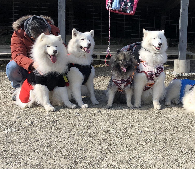 2019年12月 合同お誕生会オフ in Ven! Kitchen&Dog Garden その1_f0128542_01364467.jpg