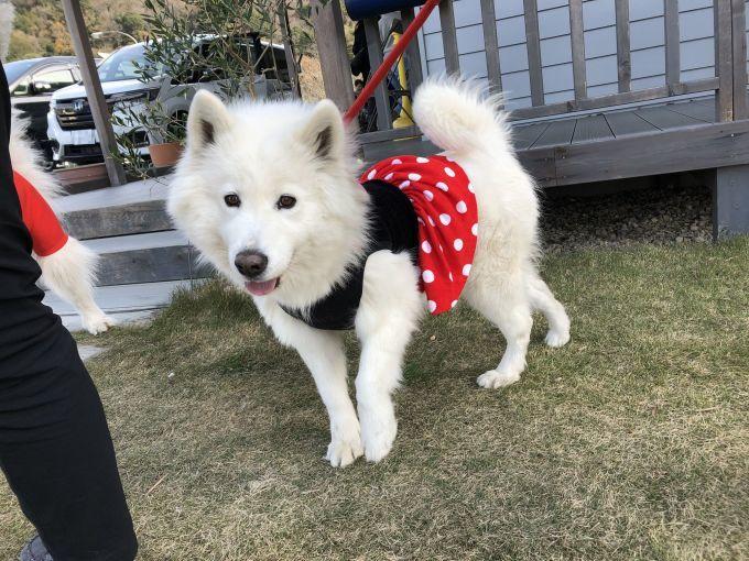 2019年12月 合同お誕生会オフ in Ven! Kitchen&Dog Garden その1_f0128542_01573061.jpg