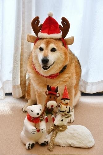 クリスマスイブの求犬募集_b0314043_10463252.jpg