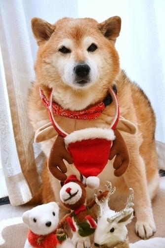 クリスマスイブの求犬募集_b0314043_10471028.jpg