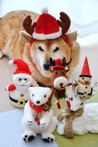 クリスマスイブの求犬募集_b0314043_10480460.jpg