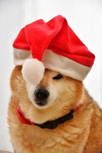 Merry Christmas!_b0314043_10485076.jpg