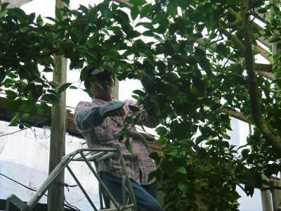デコポン予約受付開始します!熊本限定樹上完熟デコポン「ひのゆたか」を満を持して1月7日からの出荷です!!_a0254656_18444430.jpg