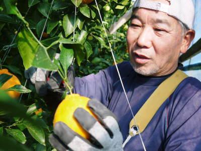 デコポン予約受付開始します!熊本限定樹上完熟デコポン「ひのゆたか」を満を持して1月7日からの出荷です!!_a0254656_18495407.jpg