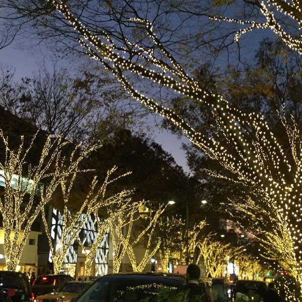 12月の風景_c0011862_13403904.jpg