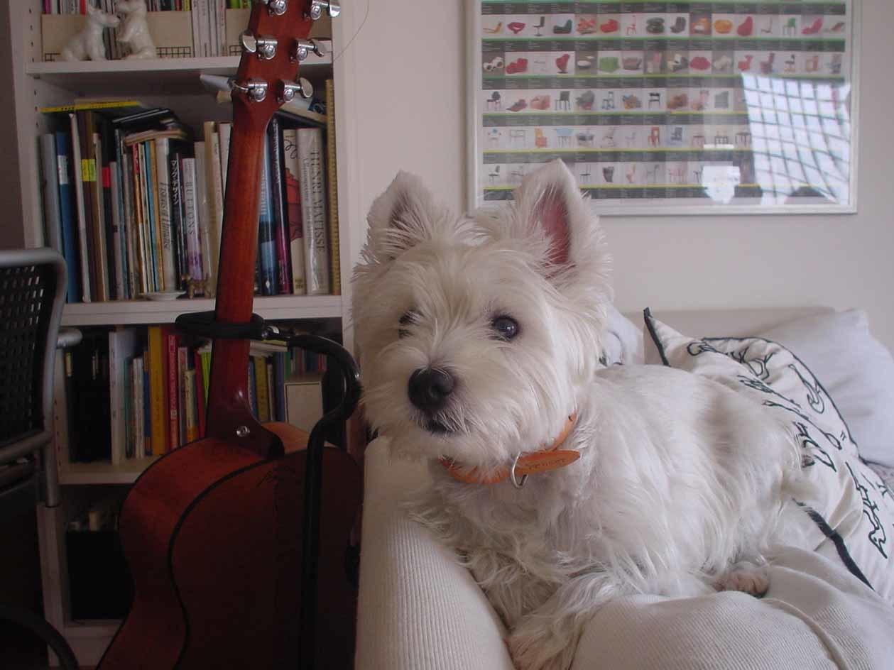 白ワンコの故郷はスコットランド。_b0107163_11223572.jpg