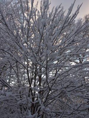 初雪にしては_a0129867_07360929.jpg