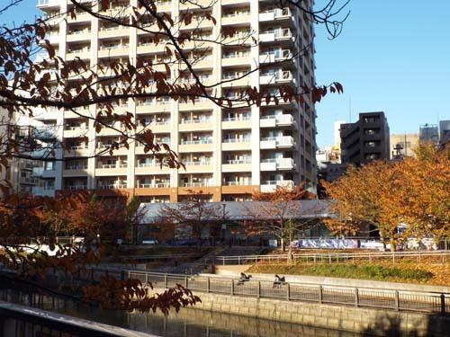 ぐるっとパスNo.5 目黒区美「斎藤芽生とフローラの神殿」展まで見たこと_f0211178_18595181.jpg