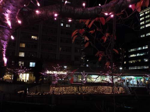 ぐるっとパスNo.5 目黒区美「斎藤芽生とフローラの神殿」展まで見たこと_f0211178_19041462.jpg