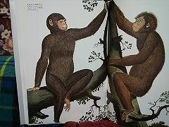 悪夢の猿たち_e0064783_15225022.jpg