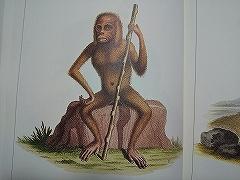 悪夢の猿たち_e0064783_15225030.jpg