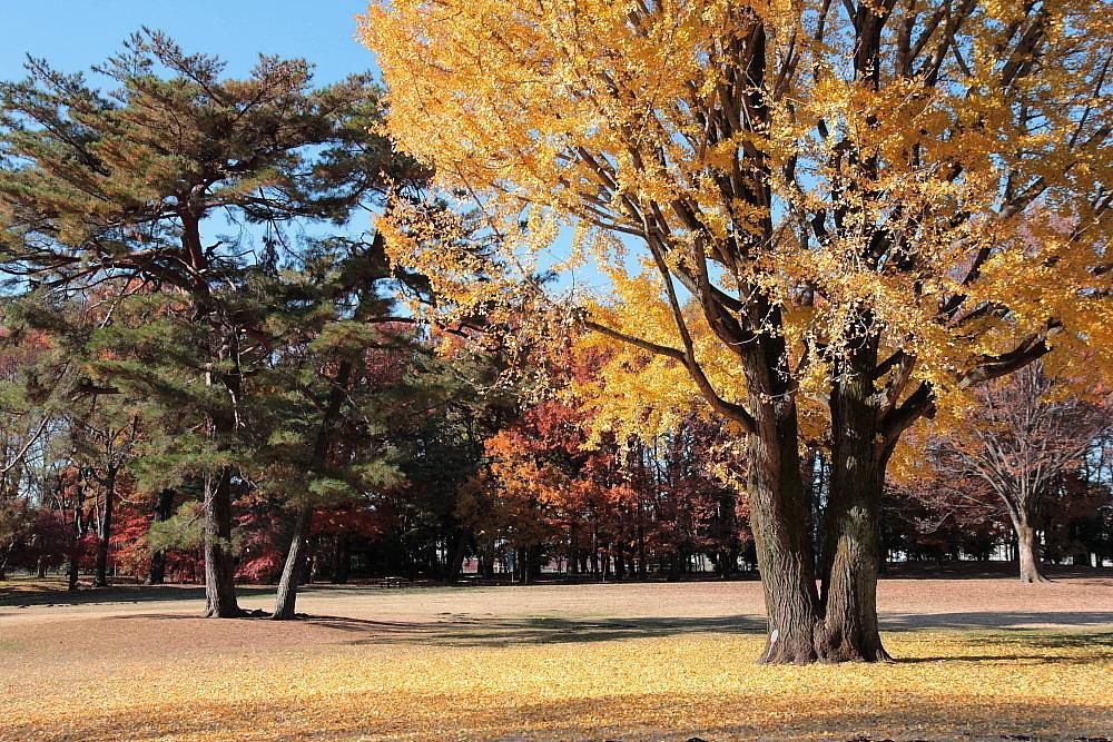 調布市 大銀杏のある野川公園 その5_e0165983_14342536.jpg