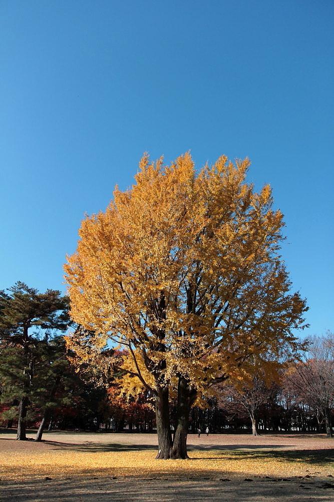 調布市 大銀杏のある野川公園 その5_e0165983_14343129.jpg