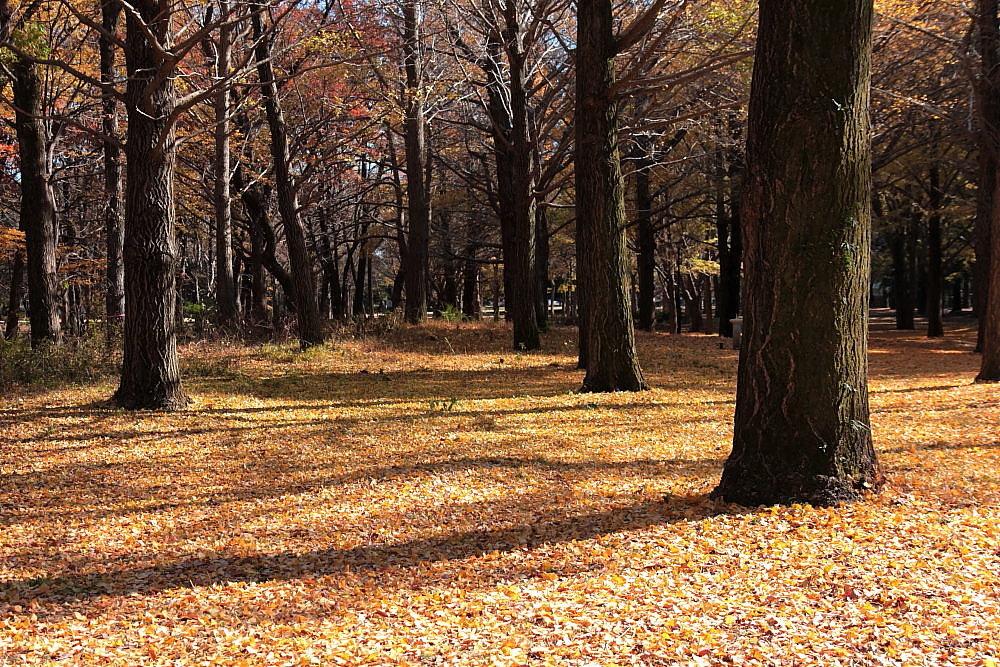 調布市 大銀杏のある野川公園 その5_e0165983_14343810.jpg