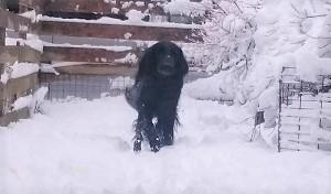 雪だ!!!_b0084194_18515416.jpg