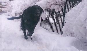 雪だ!!!_b0084194_18520687.jpg