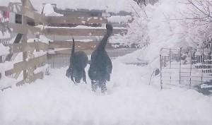雪だ!!!_b0084194_18522188.jpg