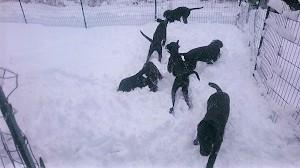 雪だ!!!_b0084194_18545893.jpg