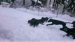 雪だ!!!_b0084194_18551059.jpg