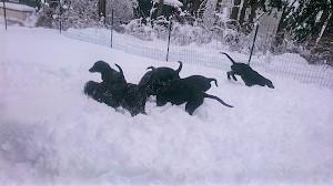 雪だ!!!_b0084194_18552991.jpg