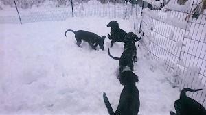 雪だ!!!_b0084194_18554484.jpg