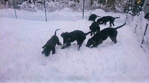 雪だ!!!_b0084194_18560475.jpg