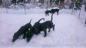 雪だ!!!_b0084194_18562474.jpg