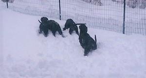 雪だ!!!_b0084194_18563724.jpg