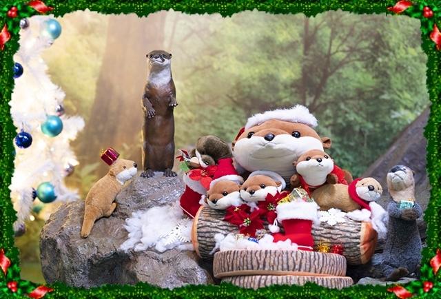 新江ノ島水族館可愛いコツメカワウソと魚達のクリスマス_b0145398_23255763.jpg