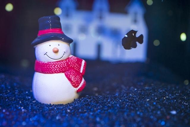 新江ノ島水族館可愛いコツメカワウソと魚達のクリスマス_b0145398_23272604.jpg