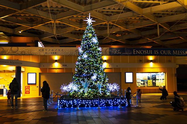 新江ノ島水族館可愛いコツメカワウソと魚達のクリスマス_b0145398_23292664.jpg