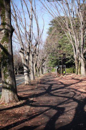 今日もサンタさんでお散歩♪_c0090198_16523061.jpg