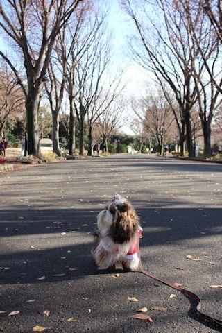 今日もサンタさんでお散歩♪_c0090198_16545531.jpg