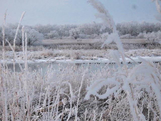 厳寒の朝 千歳川_c0360399_23040683.jpg