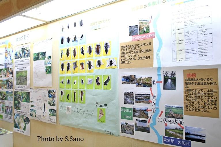 ジュニア生物調査隊~企画展示(2019)~_b0348205_17503694.jpg