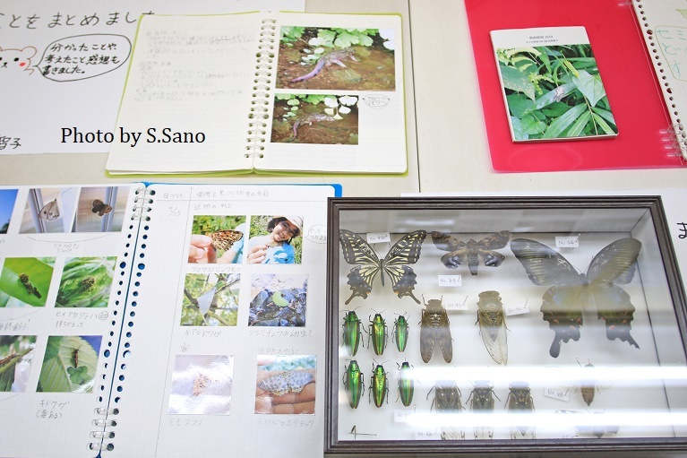 ジュニア生物調査隊~企画展示(2019)~_b0348205_17511210.jpg