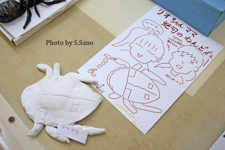 ジュニア生物調査隊~企画展示(2019)~_b0348205_17512626.jpg