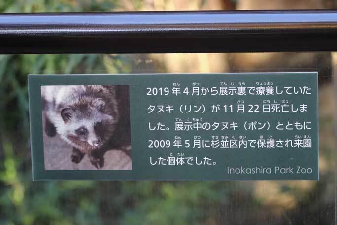 たぬき日和~ありがとう「リン」ちゃん(井の頭自然文化園)_b0355317_21501605.jpg