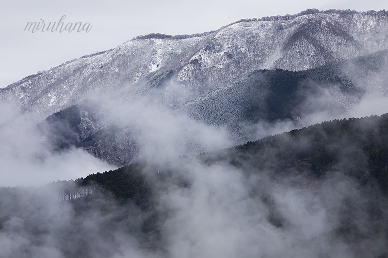 雲海から春色チューリップ。_c0037519_03530860.jpg