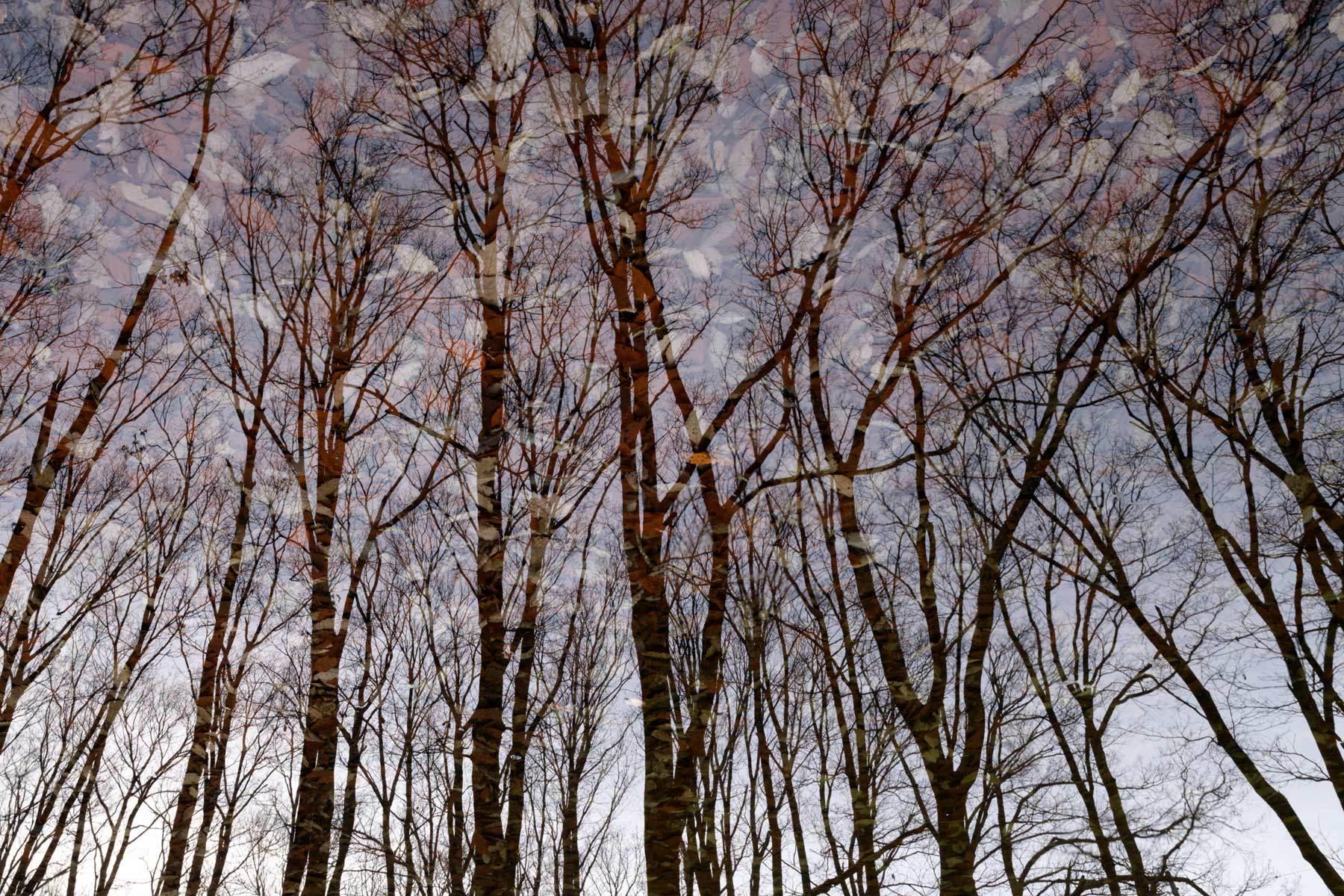木の葉模様の空_a0041722_09281503.jpg