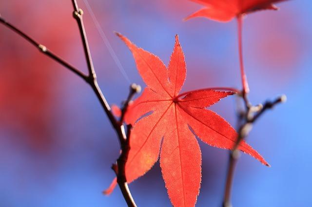 紅葉の種まき権兵衛の里散策(撮影:12月8日)_e0321325_17045206.jpg