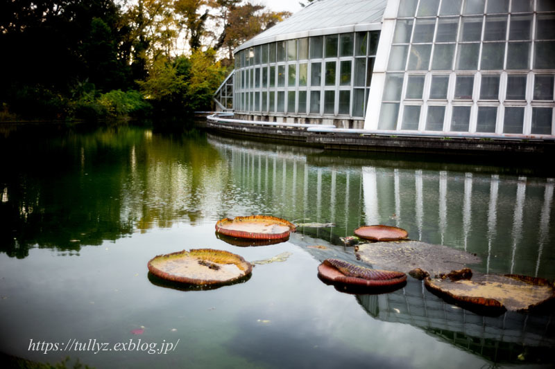京都の秋2019(17)_d0108132_00193700.jpg