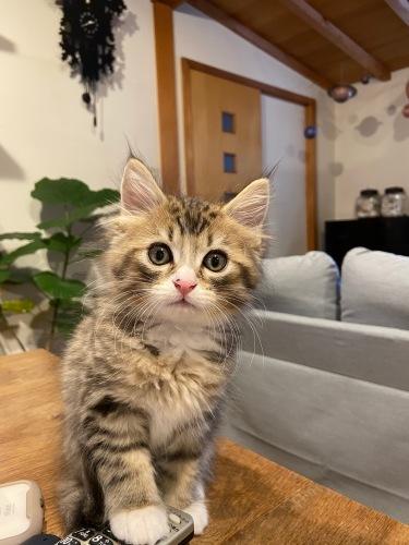 クリスマスにやって来た子猫のユール_b0325640_23101078.jpg